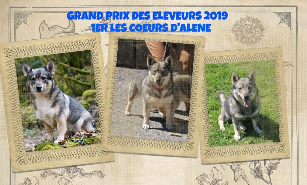 Des coeurs d'alène - GRAND PRIX DES ELEVEURS 2019