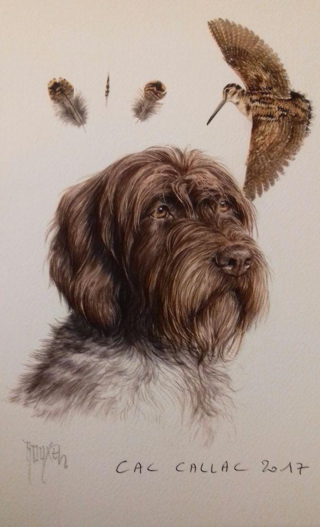 Accueil - Elevage du roi morvan - eleveur de chiens