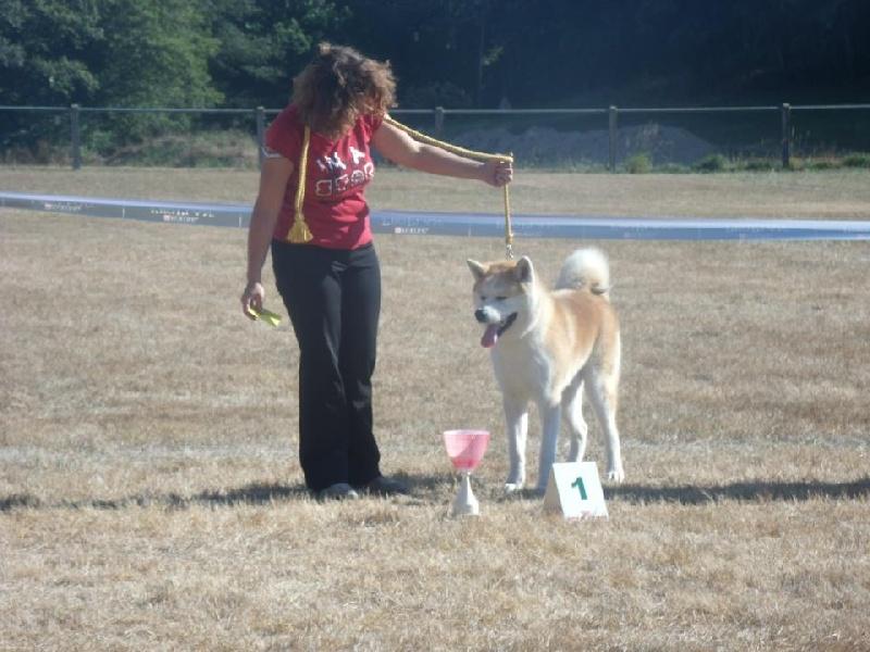 Chien elevage des terres du raz s eleveur de chiens akita for Domon plan b