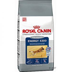 Accueil elevage de la haie becasses eleveur de chiens - Croquettes royal canin club cc sac de 20kg ...