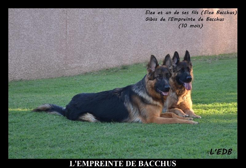 Publication : De L'empreinte De Bacchus  Auteur : Philippe ROQUES