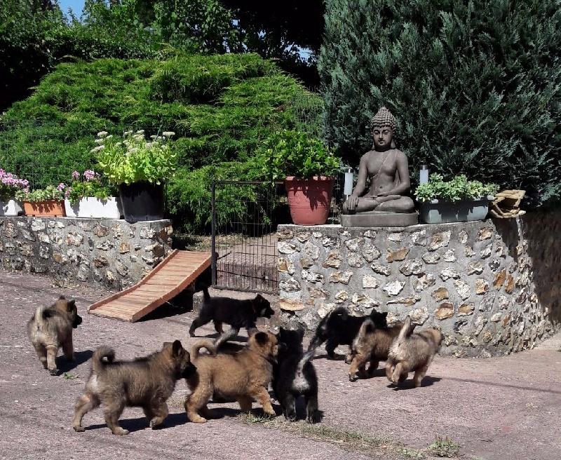 Photo - Elevage Du Soleil D'eurasie - eleveur de chiens