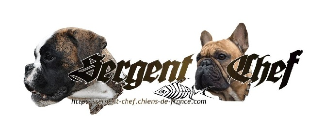 Accueil - Elevage Sergent-chef - eleveur de chiens Boxer