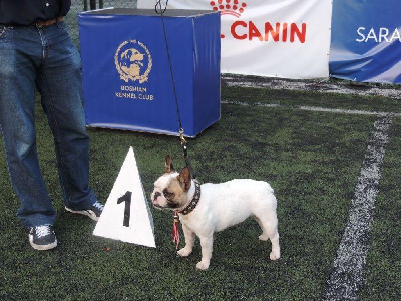 De Cans D'aragon - Championne de Bosnia i Herzegovina