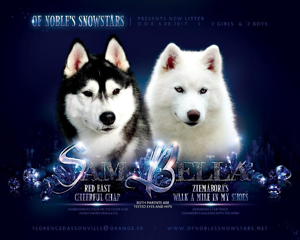 Of Noble's Snowstars - Siberian Husky - Portée née le 06/08/2017