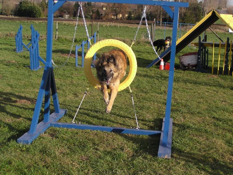 Photo elevage du puy des louves eleveur de chiens for Agility au jardin
