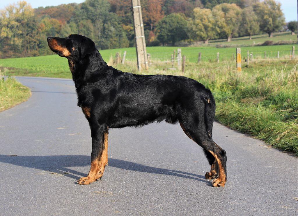 L'ami De La Campagne - Intern. dogshow Bleiswijk (NL)