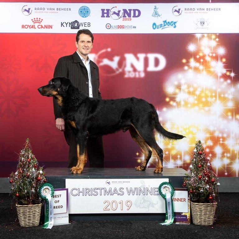 L'ami De La Campagne - Christmas Winner