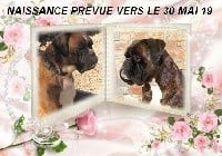 Boxer - Du Chemin De La Sainte Victoire