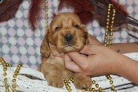 CHIOT collier rouge