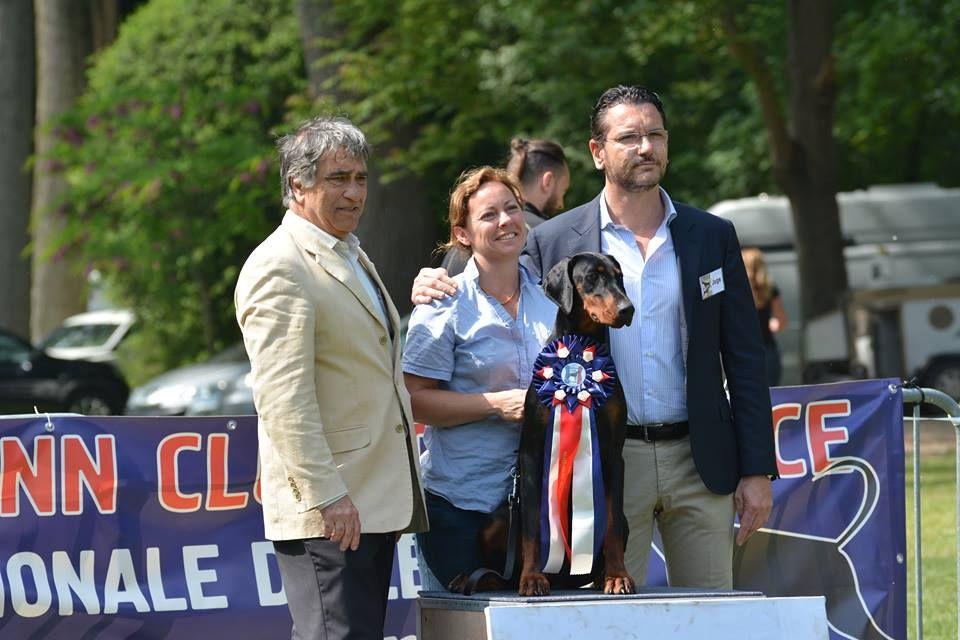 Des Brumes De Kalhan - NARNJA Meilleure Jeune de la Nationale d'élevage !