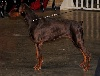 - CACIB MARTIGUES 26 11 2011