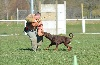 - Grand Prix de Travail Du Dobermann club de France