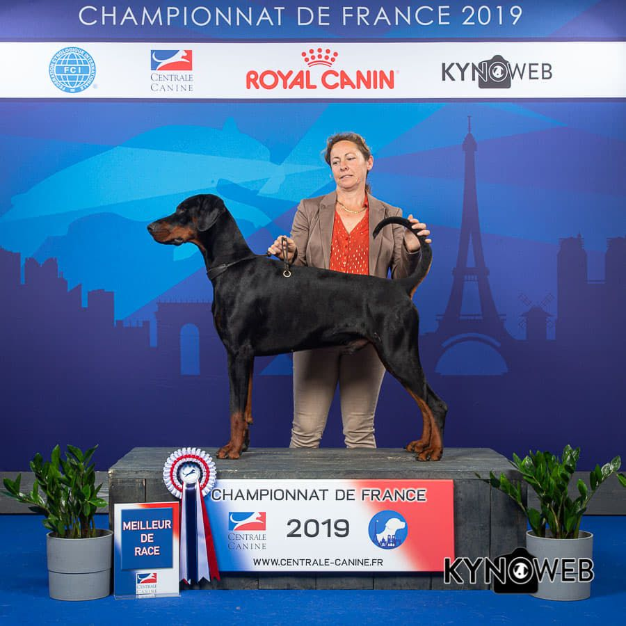 Des Brumes De Kalhan - CHAMPIONNAT DE FRANCE