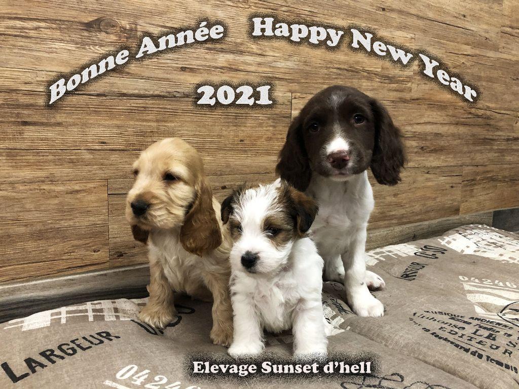 Sunset D'hell - Bonne année 2021