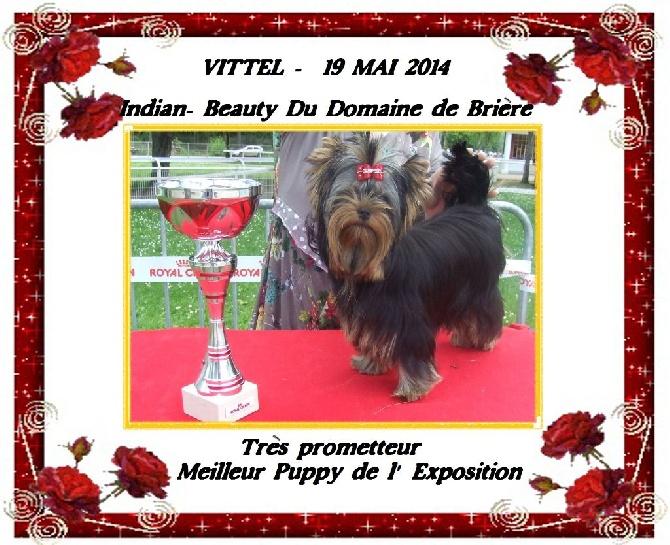 Du Domaine De Brière - Meilleur puppy de l'exposition nationale de Vittel
