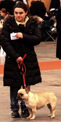 des Bouly du Bonheur - Brussels Dog Show