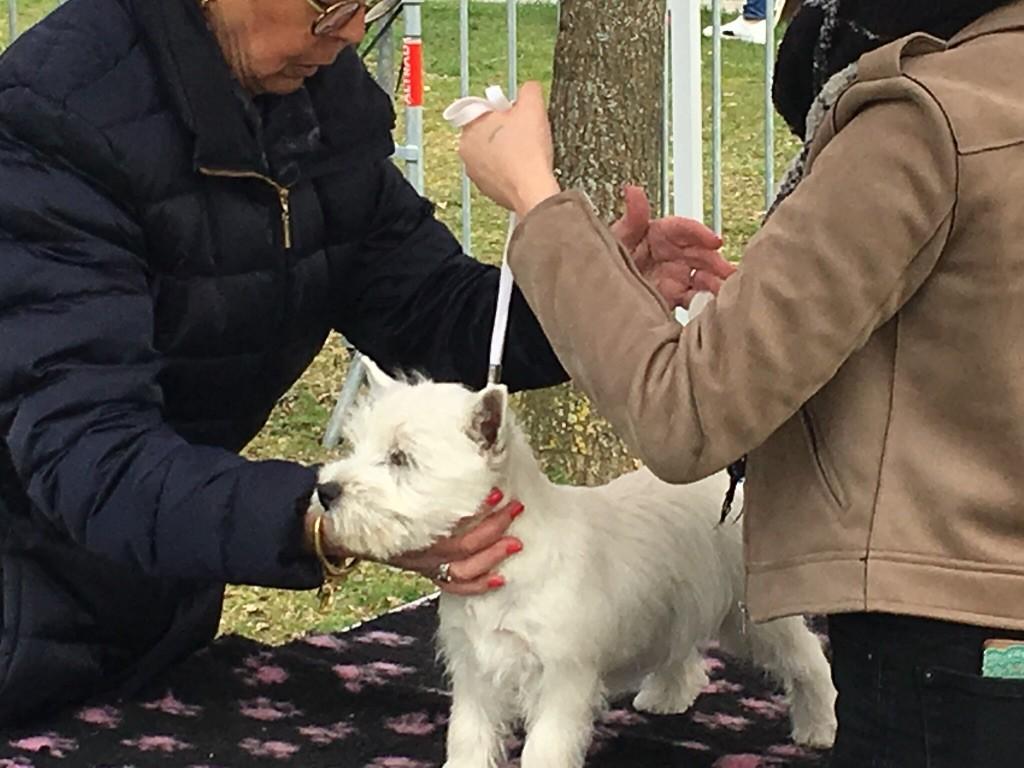 Chien - Elevage De La Douce Source - eleveur de chiens