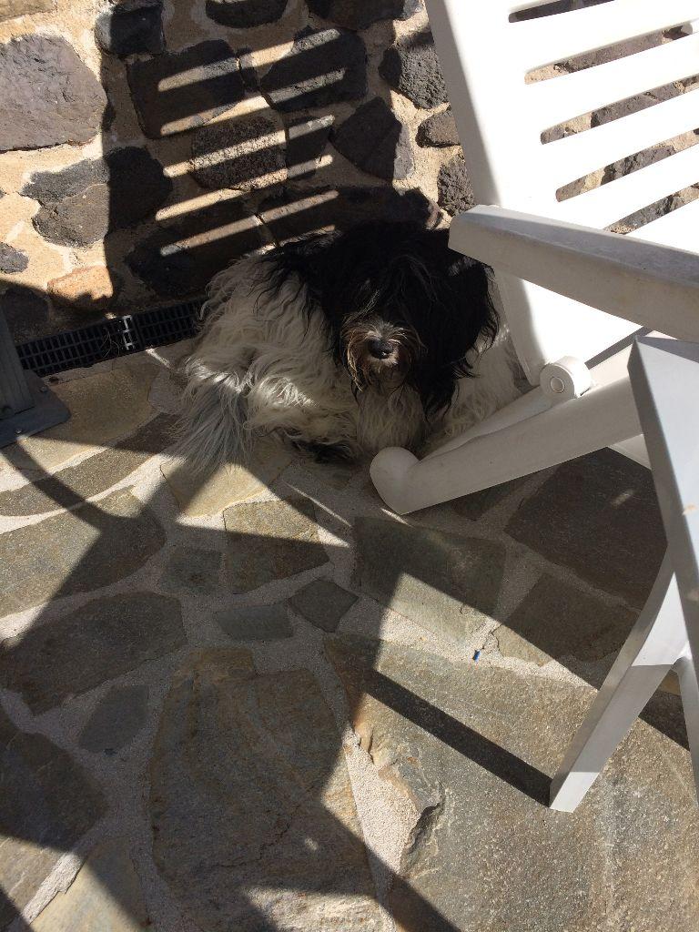 photo elevage de nature paisible eleveur de chiens schapendoes belgique. Black Bedroom Furniture Sets. Home Design Ideas