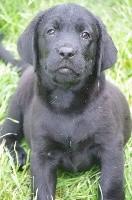 ORION (noir)