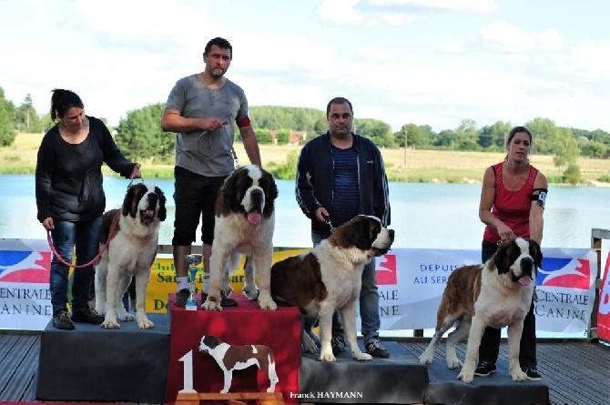 Accueil elevage des montagnes ensabl es eleveur chien du for Salon chiot 2017