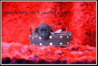 Majesty King Horik