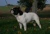- Nationale  d  élevage   2007