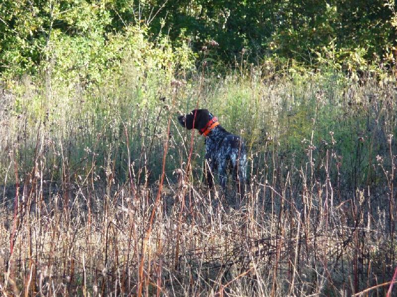 Publication : Du chant des oiseaux  Auteur : Alexandra Grandjean