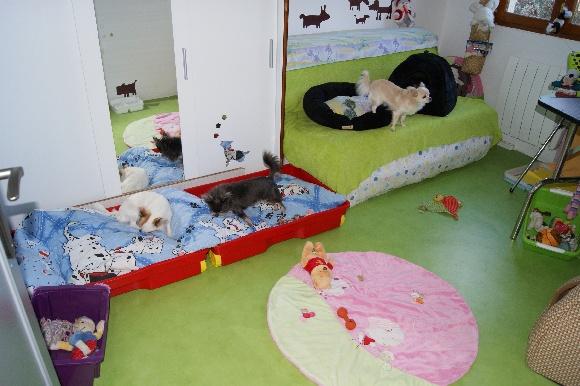 accueil elevage des nich es de riopse eleveur de chiens chihuahua. Black Bedroom Furniture Sets. Home Design Ideas