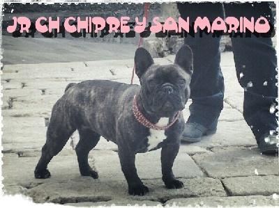 De Las Viudas Negras - NOUVELLE CHAMPION JEUNE CHIPRE ET SAN MARINO