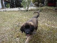 Ewen armstrong du cottage de vert bois