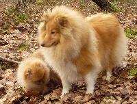 Goellowen blondy des Romarins de Mayerling