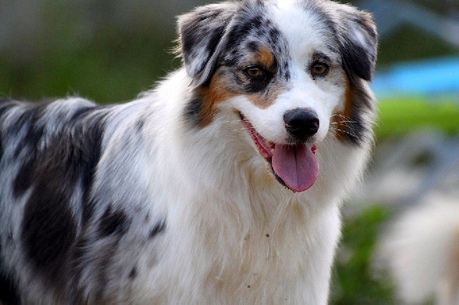 Accueil - Elevage De La Tribu De Sunka - eleveur de chiens