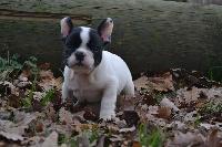 Little Stuart