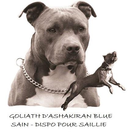 Publication : Des Gardiens De Malléa  Auteur : Dominique RIBEIRO