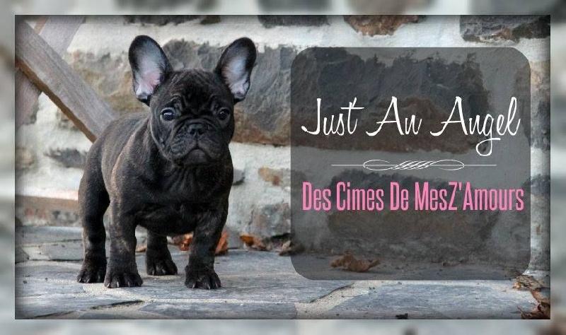 Publication : Des Cimes De MesZ'Amours  Auteur : Marie-Ange Catherine
