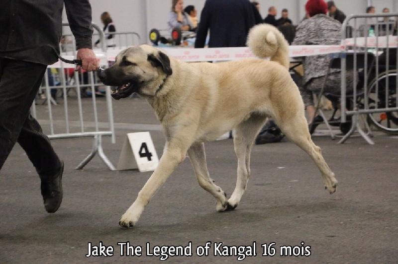 club de race kangal
