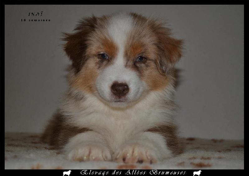 Publication : Des Allées Brumeuses  Auteur : G.A.B Photographe Animalier