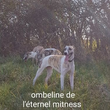 Publication : de l eternel mitness