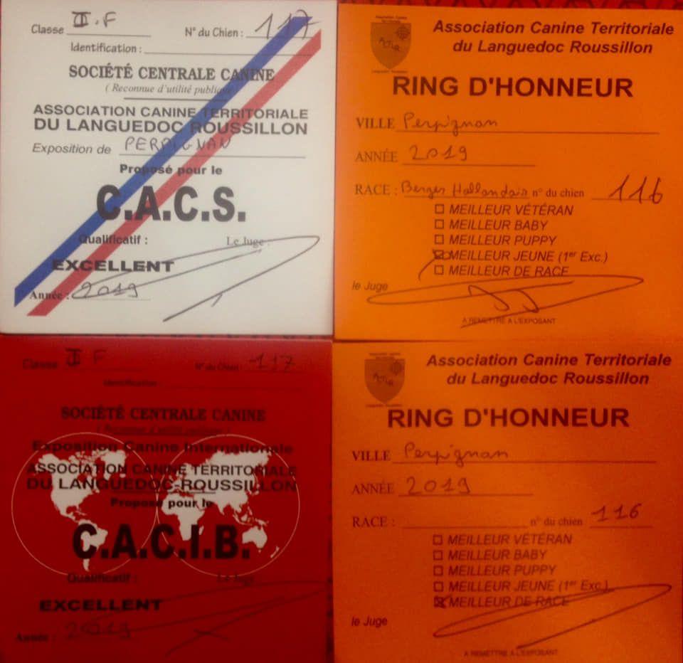 Du Rocher Des Ducs - Top résultats à Perpignan !