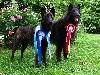 - Nouveau titre de Champion à l'élevage !