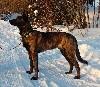 - Nordic Star Meilleur Puppy en Finlande !
