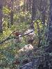 - Les brebis du grand buech parc en forêt