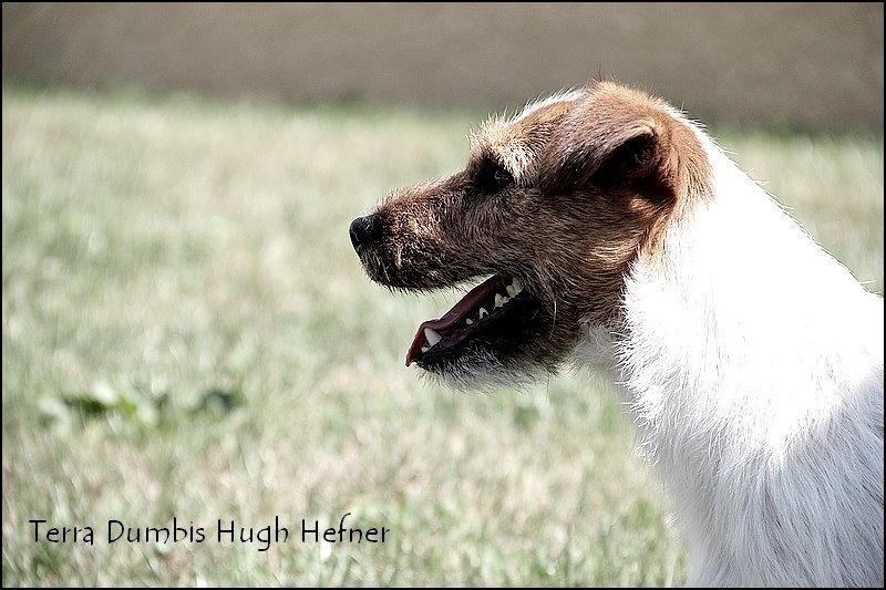CH. Terra Dumbis Hugh hefner