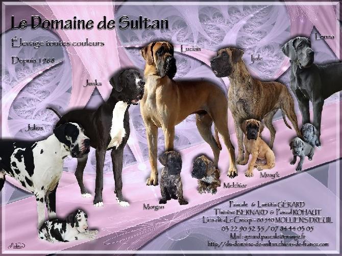 Accueil - Elevage du domaine de Sultan - eleveur de chiens