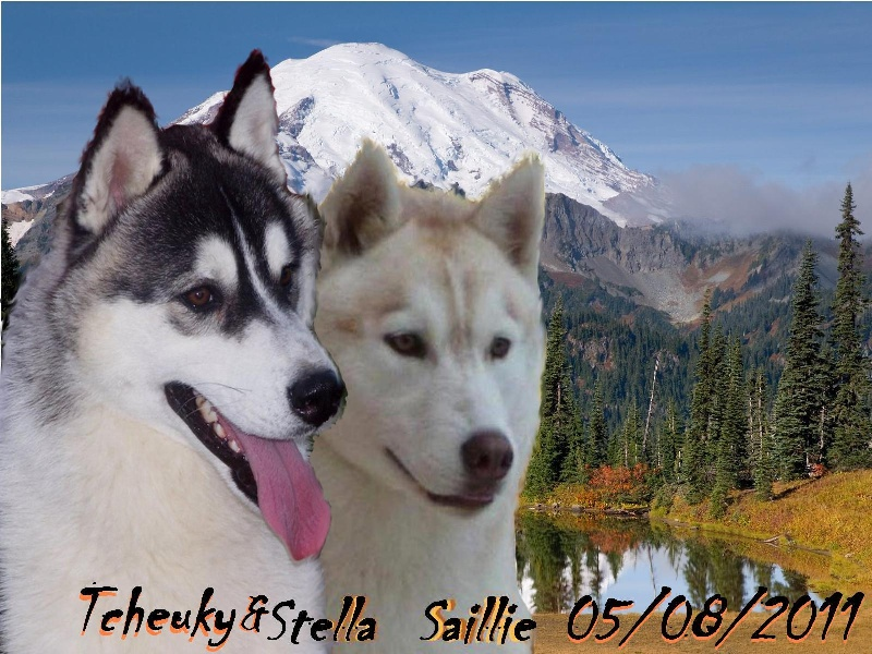 of nashkaia - Siberian Husky - Portée née le 05/10/2011