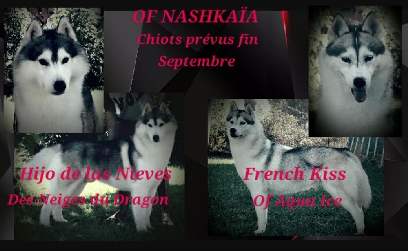 of nashkaia - Siberian Husky - Portée née le 25/09/2016