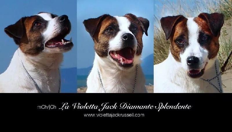 Publication : D'Austral Et Boréal  Auteur : La Violetta Jack
