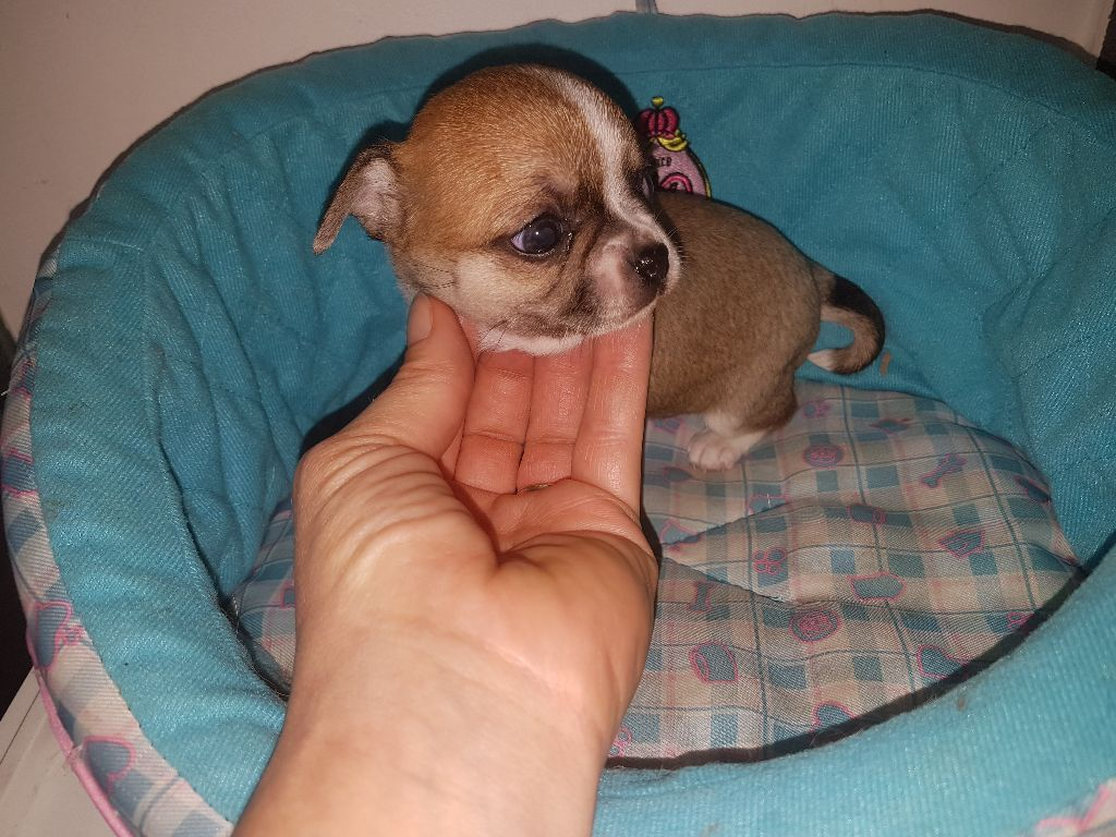 OPALE - Chihuahua