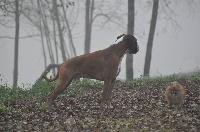 Faust du grand renon